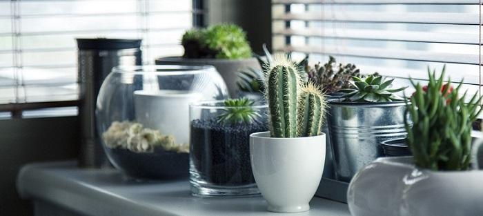 several pots of succulent plants