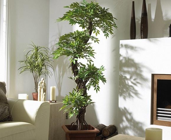 a tall interior plant next to a white couch in a living room