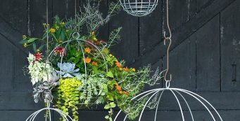 The Best Indoor Hanging Plants for Your House