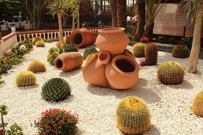 low maintenance lawn with white pebbles, cacti, suculent plants