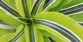 Best Air Purifying Plants to Bring Nature into Your Home