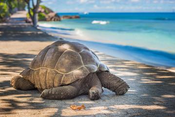 tortoise in the sea side