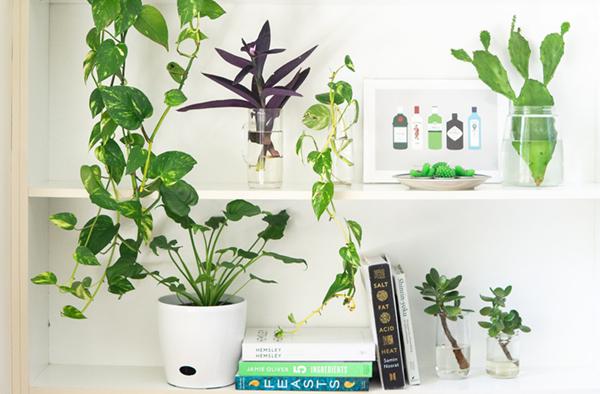 books cactus design